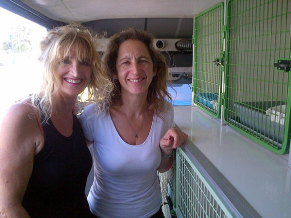 Trisha and Christiana brought us Lia, Ajax and Achilleus. You may remember Trisha also brought us Rupert a few trips ago. She's co-owner of Spartan Cats and friends with Nine Lives Greece.