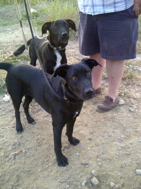 Zeus in front, Hera behind. We love their ears!