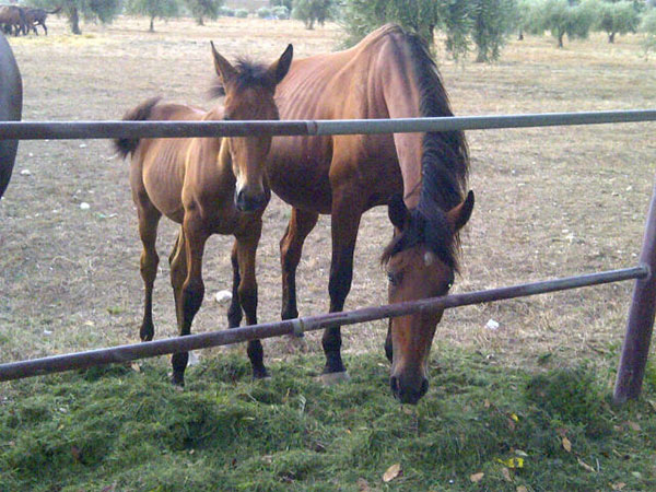 And these two horses were particularly interested in what we were doing