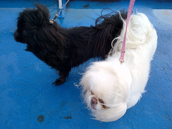 Casper and Roxi behaving like seasoned sailors on deck this morning