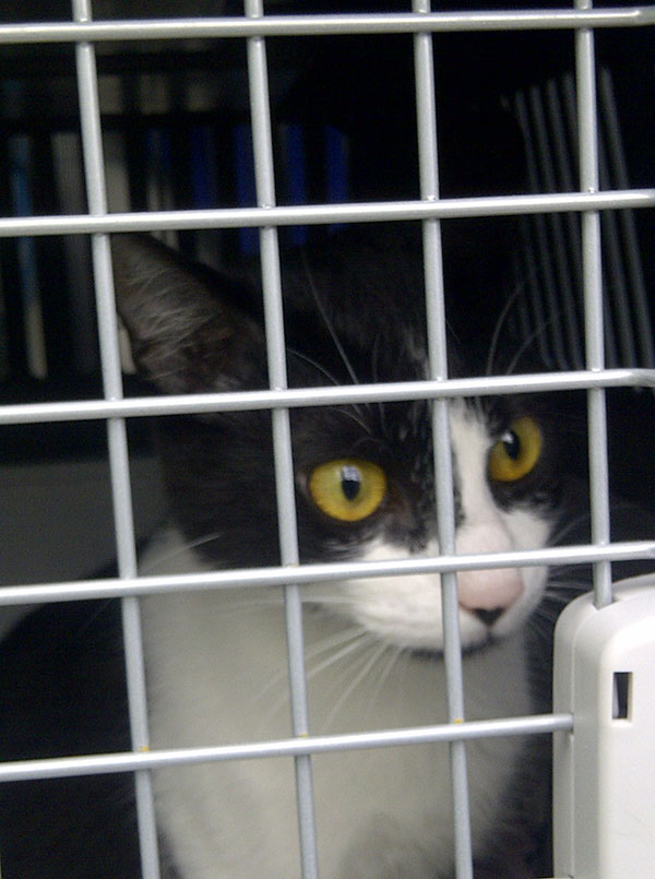 Lovely Amelie from Braga is off to Wakefield where their owners Flavia and Ben have relocated