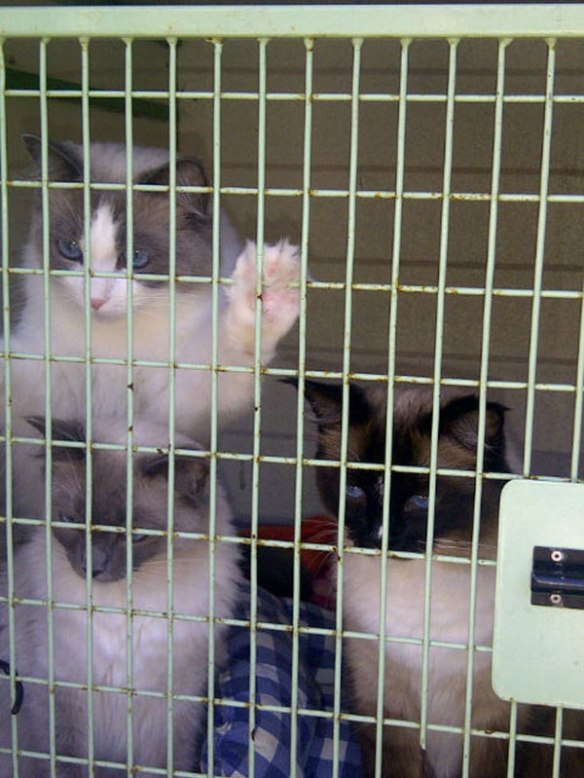 Great excitement as the 'kittens' (as Anne calls them) spot her and Brian when we open the van door