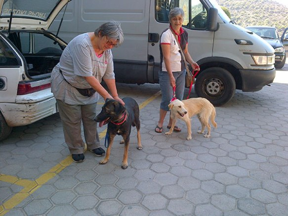 Kiki and a colleague from Filozoikos Shelter brought us Carolina and Rosa. They were a little late as Rosa had a small wound on one of her back legs, and they decided to detour to the vet for a checkup and medication to see her through the trip. No-one wanted to risk an infection setting in.
