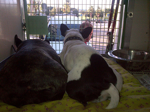French Bulldogs Lola and Pegie are from Seville. Here they are taking in the view.