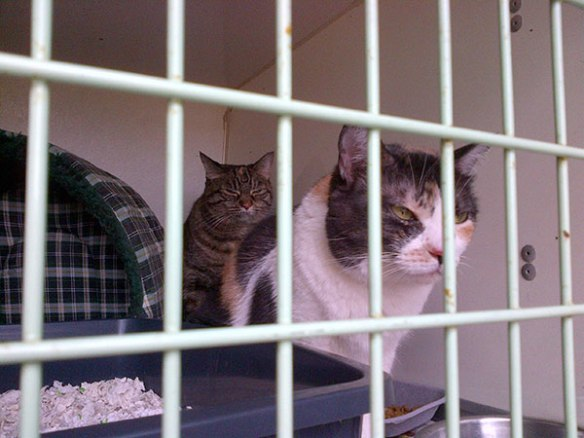Tigre and Susie joined the trip in Madrid and are heading to Cheshire to rejoin their owner Kelly.