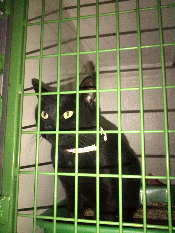 Beautiful black cat Jessie is travelling with us from Alhaurin to Aberdeen, where Claire is really looking forward to seeing her again.