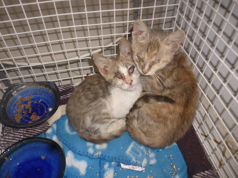 The kittens soon after they were rescued