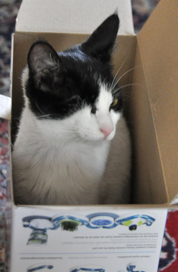 Like any other cat, Lucky loves a cardboard box to sit in!