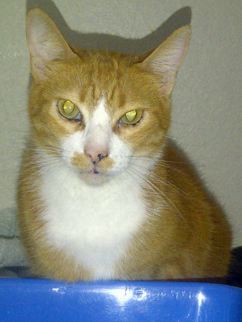 Pedro says he'd always wanted a cat called Felix. So when he and Vera acquired this handsome ginger fellow, Felix is what he was called.