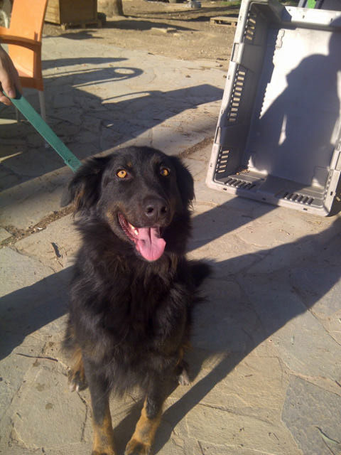 Kim has also been adopted from the Filozoikos Shelter and is heading for a new life in the UK
