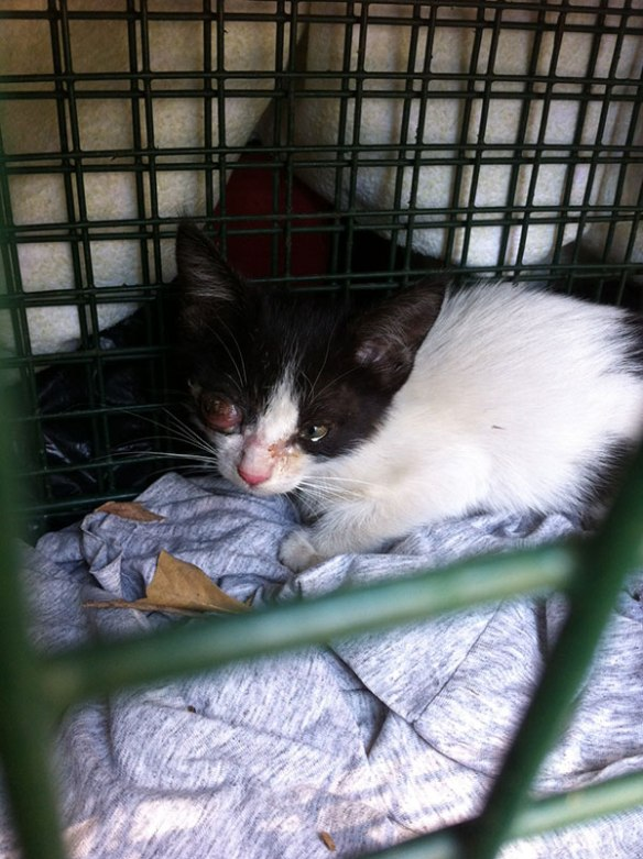 Lucky on being rescued, before any treatment on her poor eye