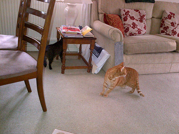 Kitty and Ginger explore their new territory