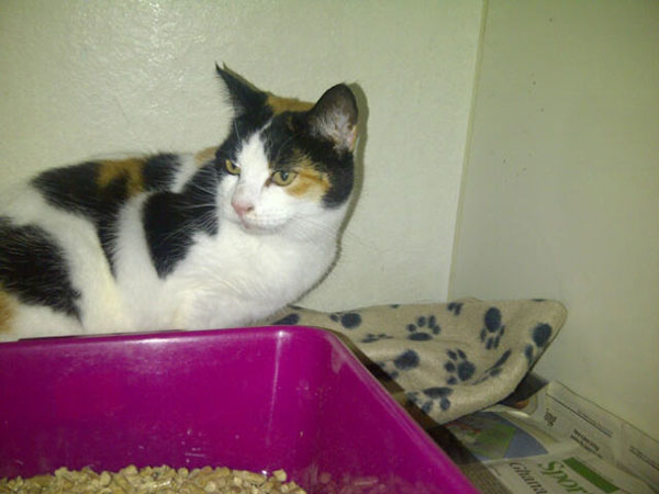Pretty tortoiseshell cat Minnie belongs to Helen, and accompanied Helen when she moved from the UK to Greece. Now on the way back to the UK, Minnie is travelling with…
