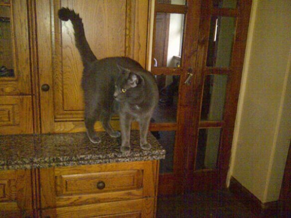 On arrival at their new home, Clooney gets busy exploring…