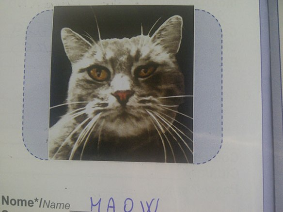 Maow's passport photo makes her look like Europe's most wanted feline! Doesn't really do her justice, does it?