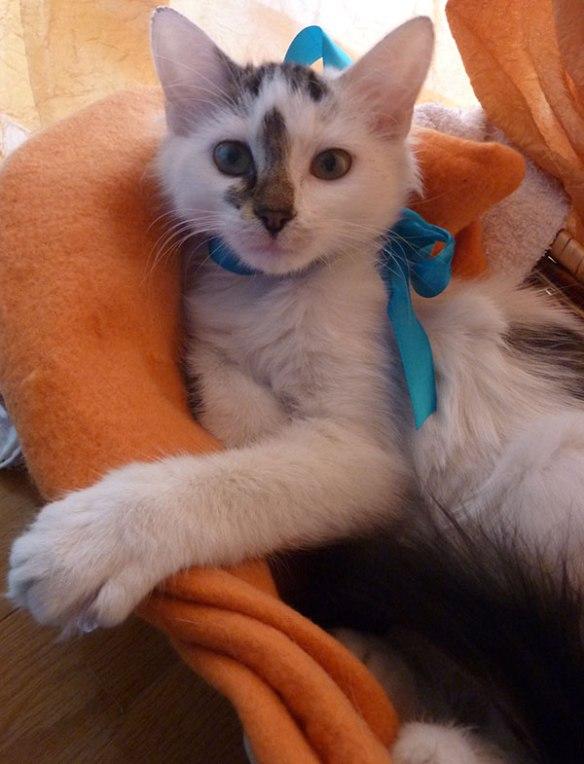 Does the blue ribbon suit me?