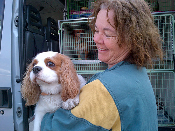 Here is Cavalier King Charles Spaniel Oscar with courier A, with whom he's been homeboarding. He's travelling with Animalcouriers to the UK to rejoin his owner Jan. Courier A has given Oscar a fleecy blanket for the journey that he's become particularly fond of. She reports that he has a very waggly tail and would make a great sniffer dog!