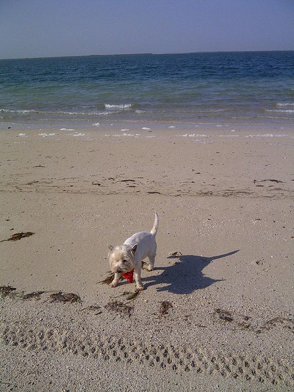 Harry checks out the local beach