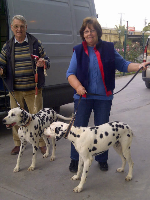 We met Mo and David with their Dalmations Nelson and Hardy near Huelva. Turns out we had brought these two dogs down to Huelva as four-month-old puppies, 10 years ago! These days they are no less energetic, but a little calmer than they were back then!