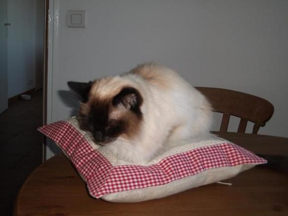 Ambrose on new cushion