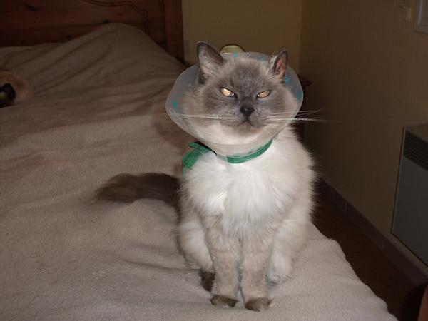 Belle wearing 'designer collar'!