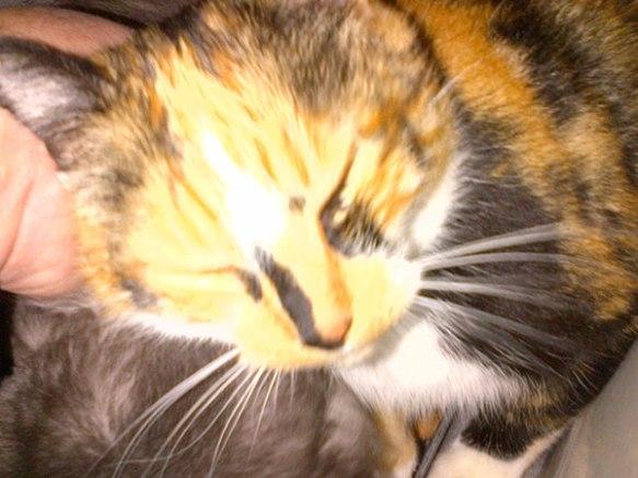 Anastacia liking an ear tickle