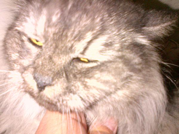 Smokey enjoying a chin rub
