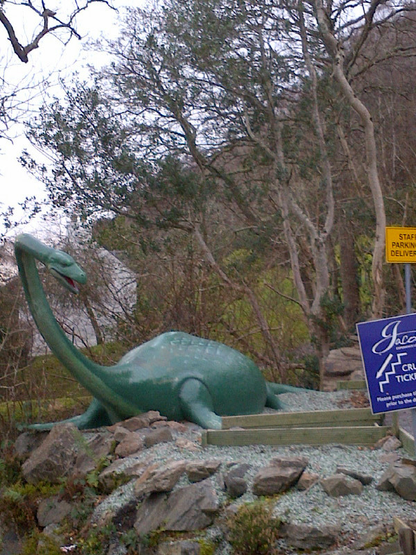 And here's Nessie herself, who travelled with Animalcouriers all the way from her winter holidays on Italy's Lake Como, where she was visiting relatives. Nessie tells us it was a much needed break as she's not getting any younger, and she finds all that ducking and diving during the tourist season pretty tiring these days!