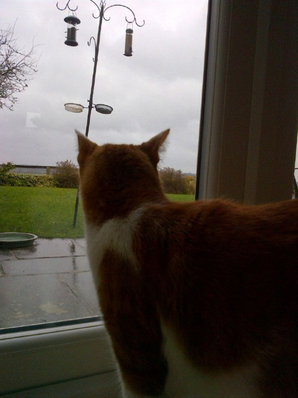 Herr Anderson eyes up the bird feeder