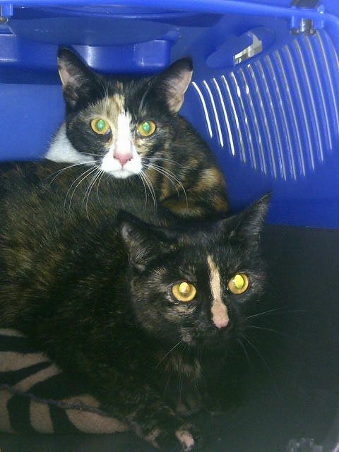 Mischi Moo and her daughter Sox