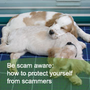 Find out about animal scams on the Animalcouriers be scam aware page