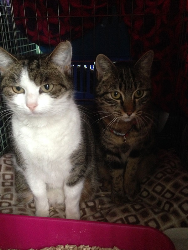 Zam and Millie reached Belfast and, as soon as they heard their owner's voice, they started singing away! They've been a very relaxed pair of travellers all the way from Alicante in Spain, and are now all tucked up in their new home in Ireland.