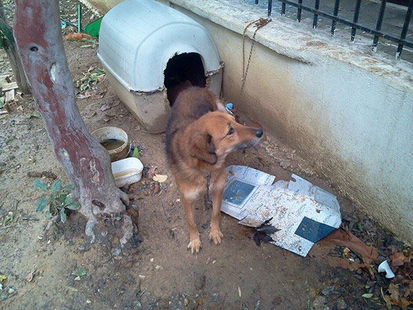 It's all a big change from the conditions Sofie was living in when Filozoikos Shelter was called in to rescue her. Not surprisingly, she willingly followed her rescuers straight out of here the minute the chain was cut!