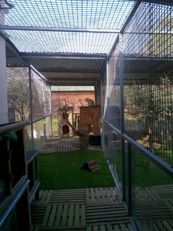 The wonderful indoor/outdoor space that Hugo, Ruben and Red have been enjoying