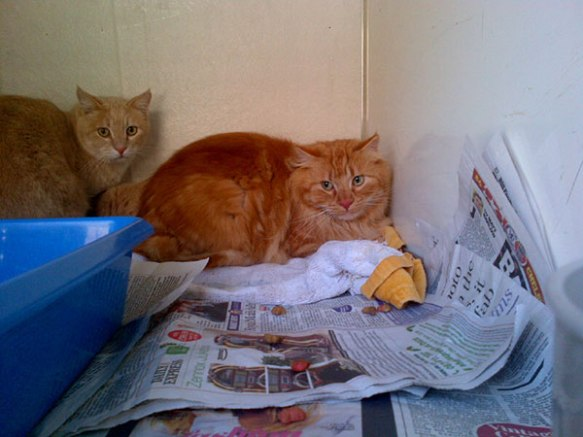 Handsome Hugo and Red, with Ruben hiding behind/beneath them!