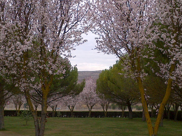 The beautiful grounds of the hotel, where the blossom shows spring has really sprung