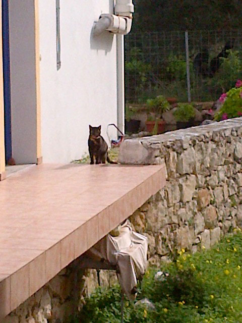 Scali is quite nervous of people as she had been badly treated, so we were lucky to catch this glimpse of her as she rediscovered her Cretan home. She and Miski were dumped a kilometre apart at five weeks old. Lucky girls to have been adopted by Jill and Sheila!