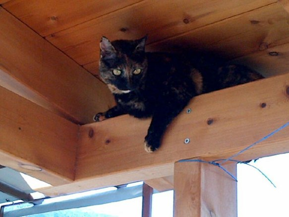 Miski was so excited to be home she shot up to the rafters…