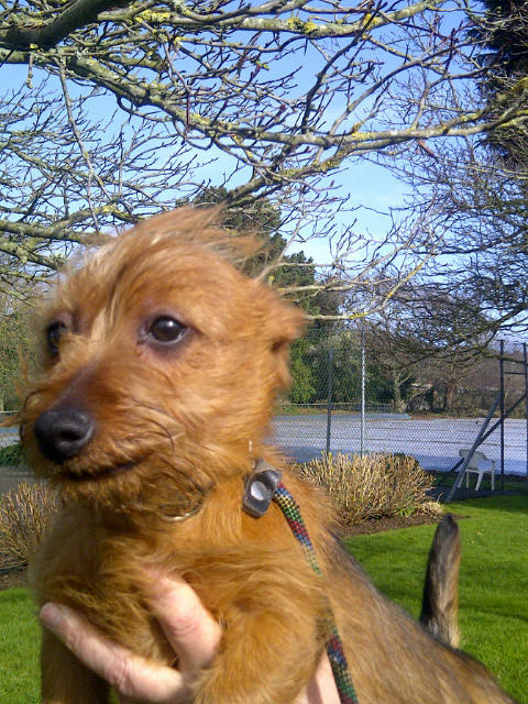 Indie looking a bit windswept after so much dashing around