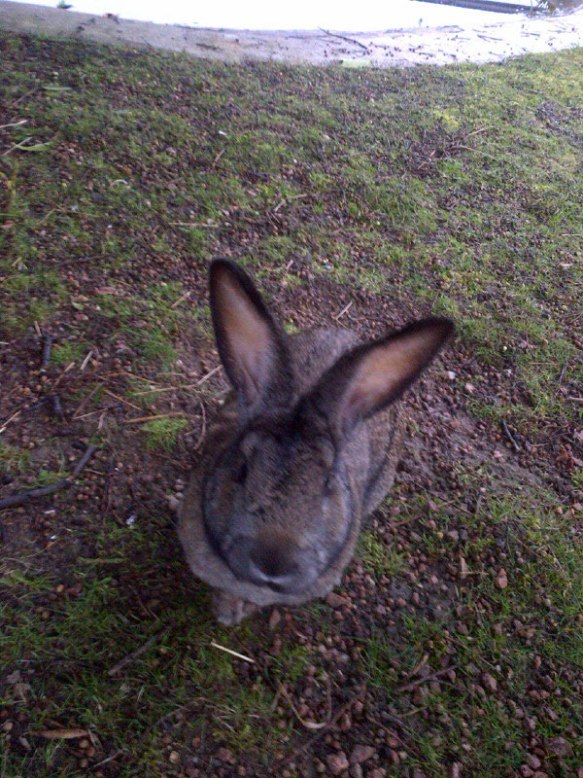 A very tame rabbit watched us while we tidied out the van this morning, and was very happy to accept a bit of Ryvita from us