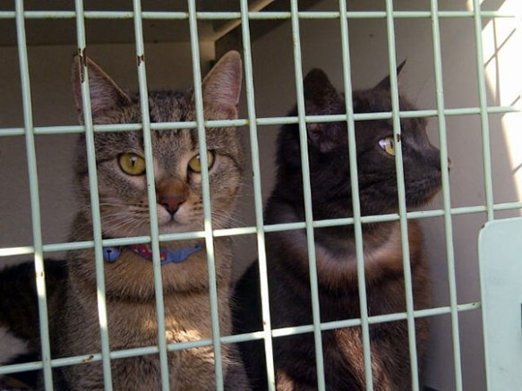 Very alert Mouser (L) and Gracie (R) are keen to have a look around