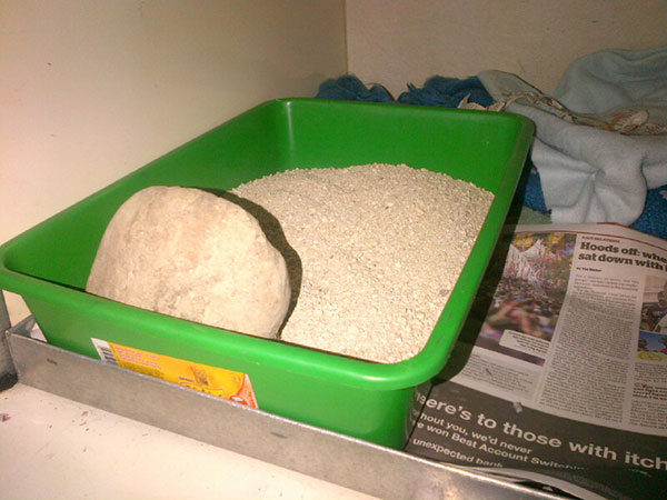One of our other kitty passengers has been found wearing his litter tray on his head each morning, with litter all over him, his bedroom and half the van! We've now taken desperate measures to anchor the tray, and hope he finds having his very own Zen garden suitably soothing!