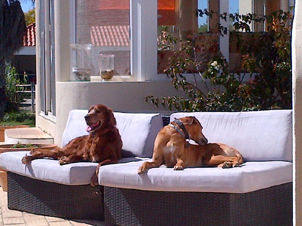 The resident dogs at the Animal Inn — Tinto and Benjie. Looks like a hard life!