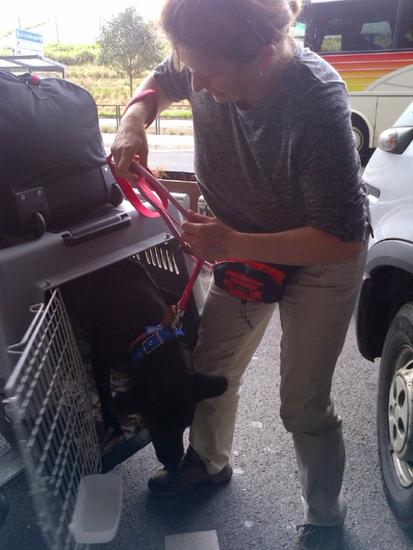 All the dogs were secure on leads and ready to jump out as their travel boxes were opened