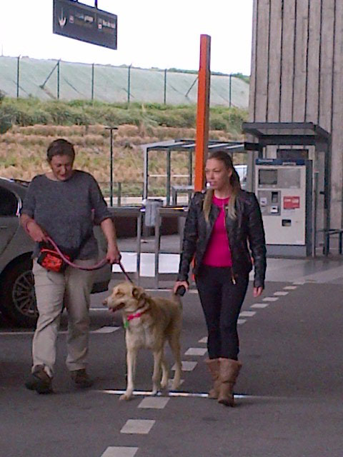 Zorba the Greek — now Zorba the Brit — comes back from a short walk with Nell and Alex