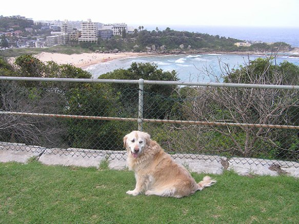 Cassie at home in Sydney — lucky dogs have a beach at the end of the road!