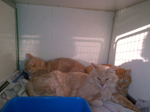 The very handsome and relaxed trio of Ruben, Hugo and Red