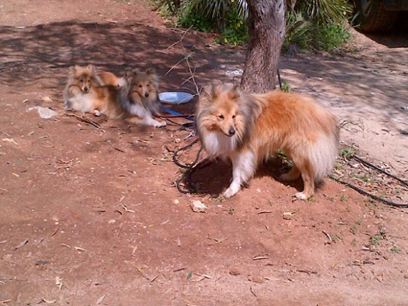 L to R: Nutmeg, Ginger and Jake