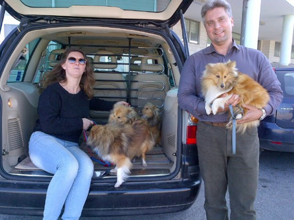 Looks like the Shelties have a lovely new family to look after them