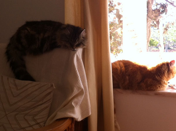 Lookielikey and Cornflake love their new Portuguese environment